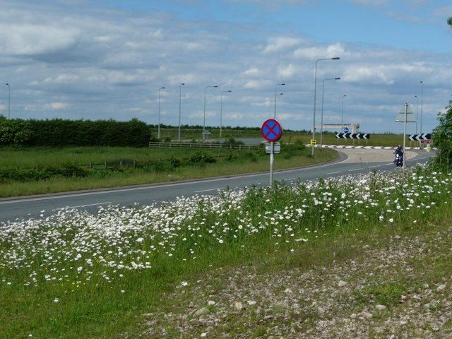 File:Bank of daisies - Geograph - 1910364.jpg