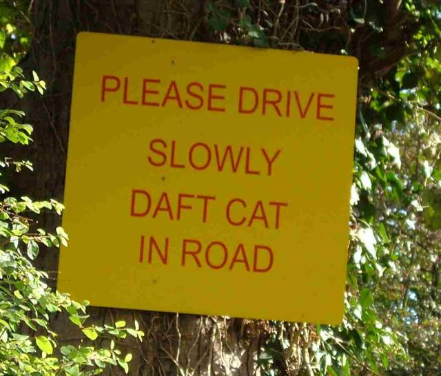 File:Daft Cat in Road - Coppermine - 6380.jpg