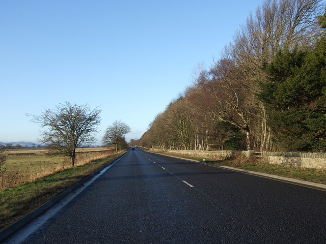 File:Hopetoun Wood by the A903 - Geograph - 641419.jpg