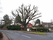 Oak tree at road junction, Barnt Green - Geograph - 127292.jpg