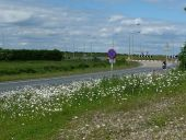 Bank of daisies - Geograph - 1910364.jpg