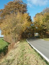 Autumn Trees Towards Buckworth - Geograph - 1045843.jpg