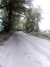 Tree-lined road - Geograph - 463987.jpg