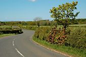 Along The Road - Geograph - 1303750.jpg
