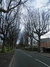 Tree lined Aigburth Vale, Liverpool - Geograph - 2855408.jpg