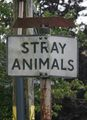 Stray-animals.jpg