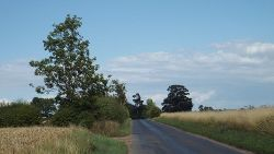 Country road near Ware, Hertfordshire - Geograph - 3583339.jpg