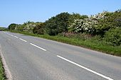 Hedgerow on the Main Road - Geograph - 181733.jpg