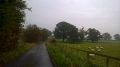 20151028-0825 - Single Track lane near Northallerton - 54.2992386N 1.4457901W.jpg