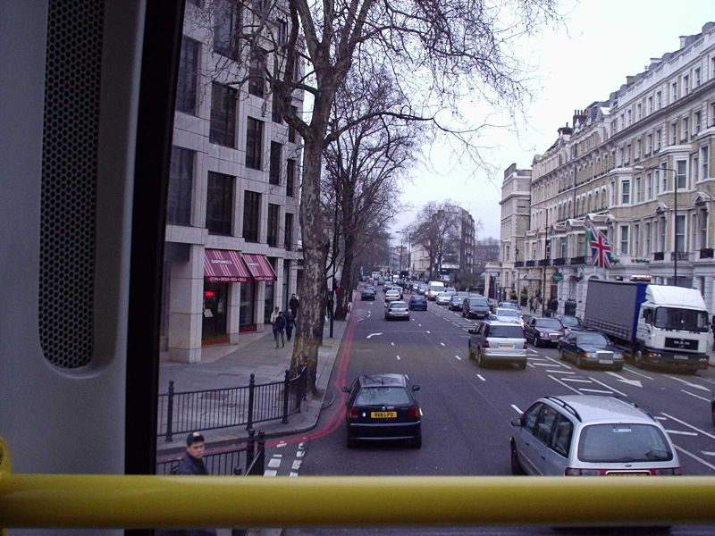 File:09. Cromwell Road - Give Way to Tree - Coppermine - 501.jpg