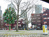 London Awayday - Traffic light tree - Coppermine - 17501.jpg